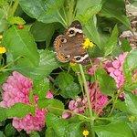 Zdjęcie South Texas Botanical Gardens & Nature Center