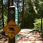 Lynn Canyon Park صورة فوتوغرافية