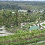 Terrazas arroz Jatilluwih