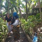 Φωτογραφία: Bukit Sari Pecatu AgroTourism
