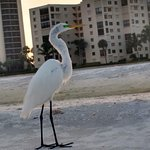 Gulfview Manor Resort Picture
