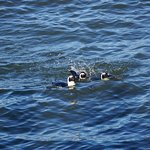 Zeepaard Boat Tours صورة فوتوغرافية