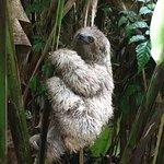 Billede af MemoAdventures Tours Costa Rica