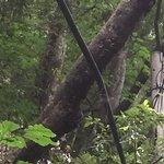 Photo of Kamba Falls