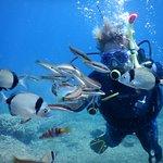 Фотография Skiathos Diving Center