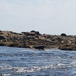 Island RIB Voyagesの写真