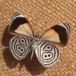 Butterfly World صورة فوتوغرافية