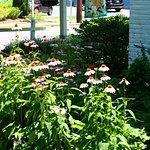 Flora outside of Kemp House