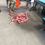 صورة فوتوغرافية لـ The Reel Contender Fishing Charter