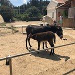 Corfu Donkey Rescue Foto