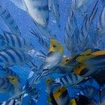 Foto di Aquabike Adventure