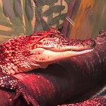 Фотография Great Lakes Aquarium