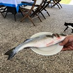Faros Fish Tavern Photo