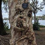Knotty tree