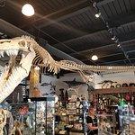 The Dinosaur Store照片