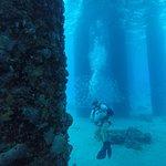 صورة فوتوغرافية لـ Sweet Bottom Dive Center