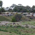 Kangaroos and the slumber huts