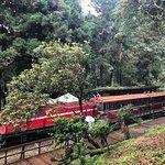 阿里山森林遊樂區照片