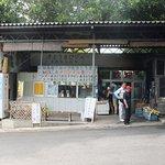 米原のヤエヤマヤシ群落 駐車場横の生ジュース店