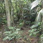米原のヤエヤマヤシ群落 入口から鬱蒼としている