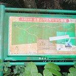 米原のヤエヤマヤシ群落 年期の入った案内看板