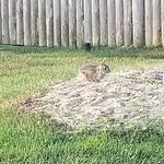 Family of bunnies that we saw everyday 🐇