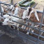 Billede af Fancy's Farm