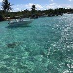 Foto de Icacos Island