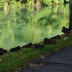 Billede af Passeggiata Lungo il Fiume Sile