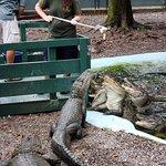 Foto de Arkansas Alligator Farm & Petting Zoo