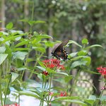 Bilde fra Panhandle Butterfly House