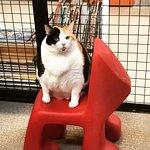 Foto de The Cat Depot