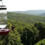 Multiple feeders and zillions of hummingbirds.