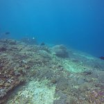 Photo of Manta Manta Diving