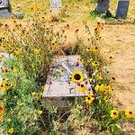 Bild från Campo Santo Cemetery