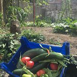 #BarBerlin #JardinBerlin providing bio veggies to the bar for lunches and #BrunchBerlin