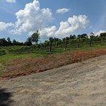JOLO Winery & Vineyards-billede