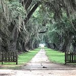 Foto de Evergreen Plantation