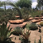 Foto de Ethel M Chocolates Factory and Cactus Garden