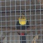 Timbavati Wildlife Park resmi
