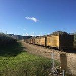 Loading the cane train!