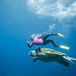 Snorkelling with Loggerhead Turtle