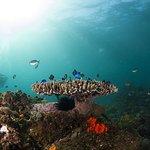 Underwater at Julian Rocks
