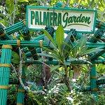 Фотография Palmera Garden Hotel and Resort