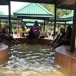 Poring Hot Springs. Under the hut
