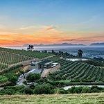 Breathtaking views at Hidden Valley Wines