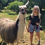 Photo de Peak Hill Llamas