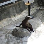 Sea Lion performance