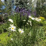 صورة فوتوغرافية لـ Betty Ford Alpine Gardens
