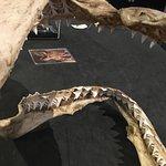 Bild från Grant Museum of Zoology